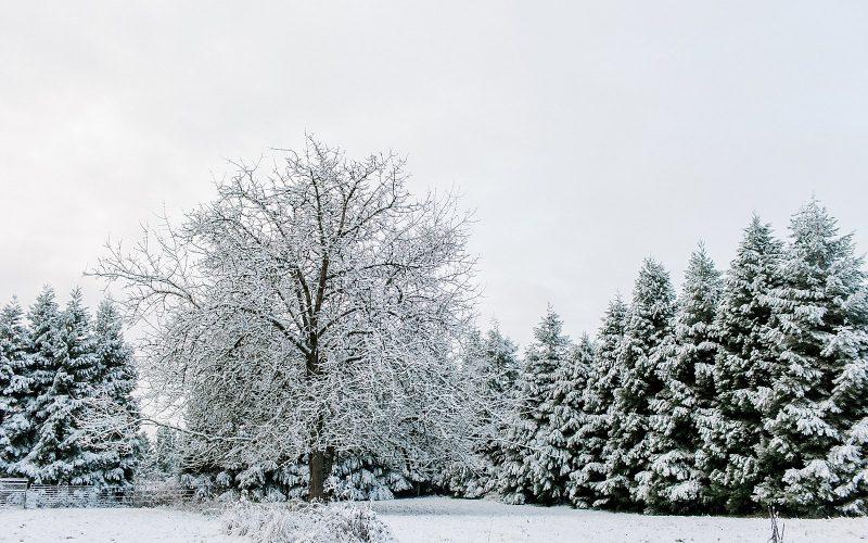 Snowy Scenes // Scio, Oregon